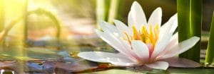 Naturopathy Canonsburg PA contact us
